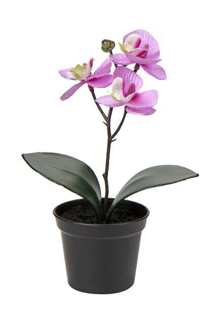 Orkidea tekokasvi, Pituus 20 cm, Pinkki