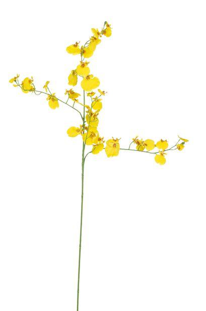Orkidean oksa Oncidium tekokasvi, Korkeus 92 cm, Keltainen
