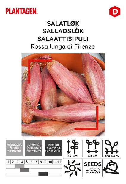 Punasipuli 'Rossa lunga di Firenze', Monivärinen