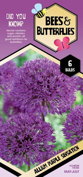 Ukkolaukka 'Purple Sensation', Valkoinen