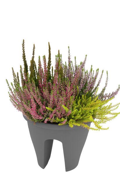 Heather Romantic Garden realing pot  pot 27 cm