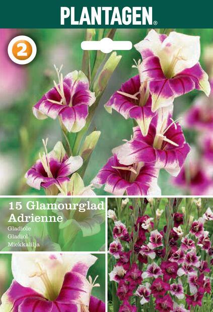 Gladiolus 'Adrienne', Pinkki