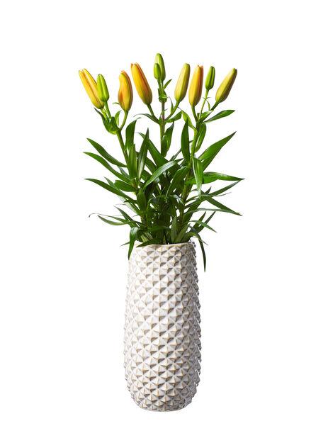 Liljat, Korkeus 60 cm, Useita värejä