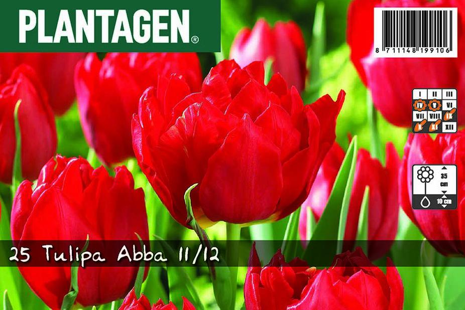 Tulppaani 'Abba', Useita värejä