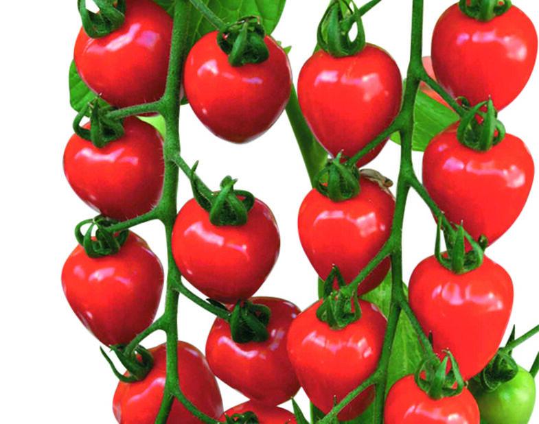 Mansikkatomaatti 'Garden Berry', Ø10.5 cm, Punainen