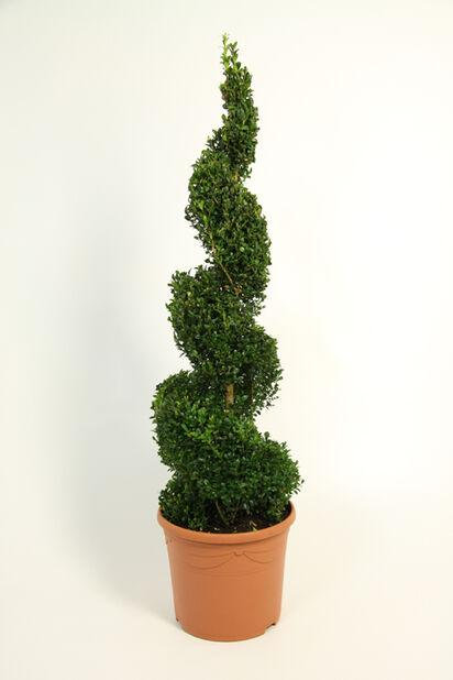 Puksipuuspiraali , Ø23 cm, Vihreä