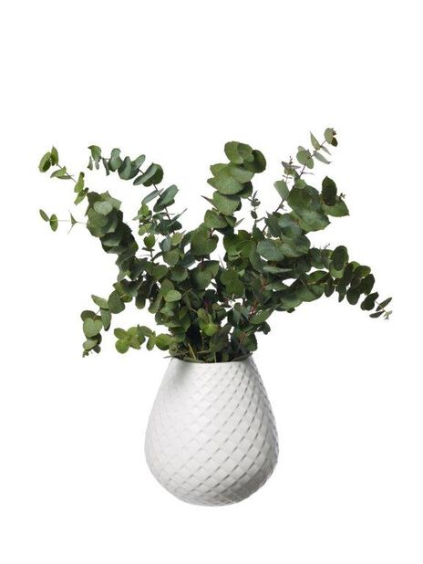 Eukalyptus 5-pakk, Korkeus 50 cm, Vihreä