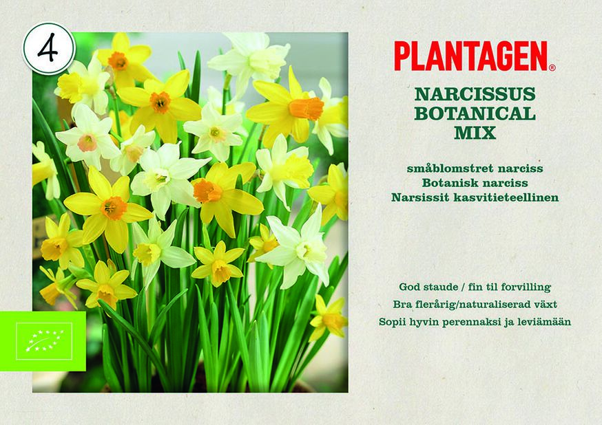 Narsissit kasvitieteellinen