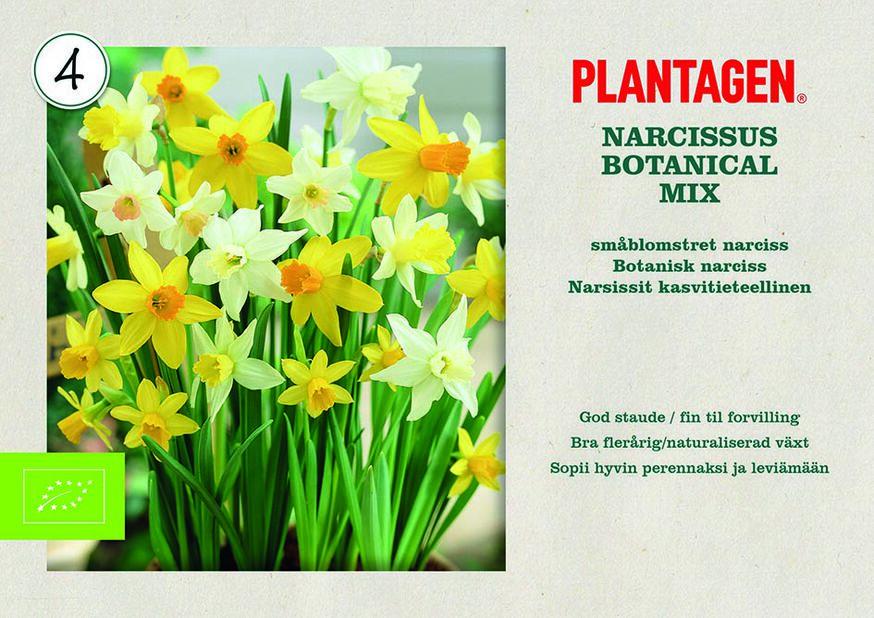 Narsissit kasvitieteellinen, Keltainen
