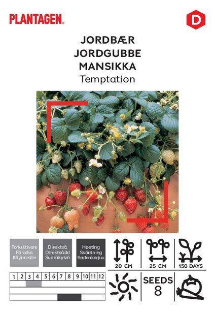 Mansikka 'Temptation'