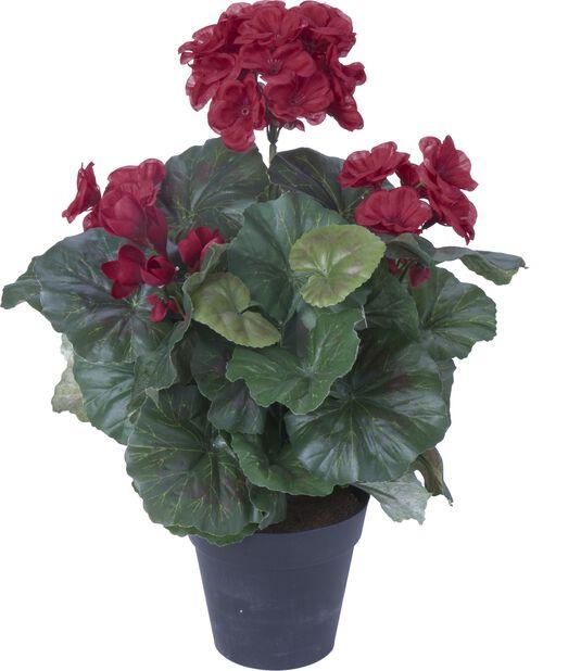 Pelargoni tekokasvi, Korkeus 32 cm, Punainen