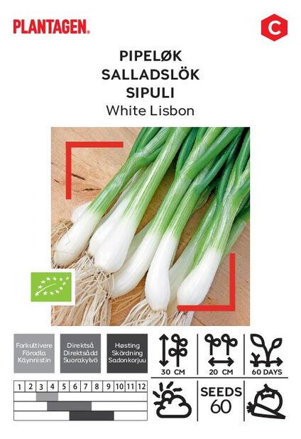 Sipuli 'White Lisbon'
