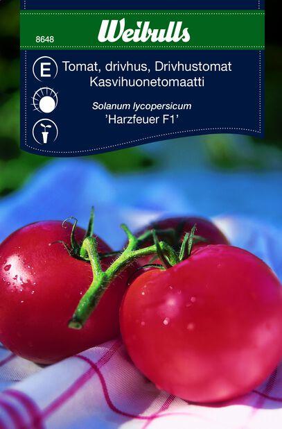 Tomaatti 'Harzfeuer f1'