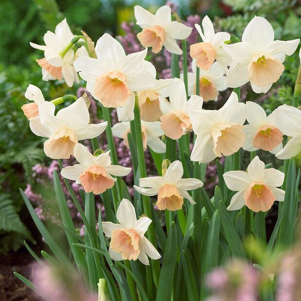 Narsissi 'Katie Heath', Ø12 cm, Luonnonvalkoinen