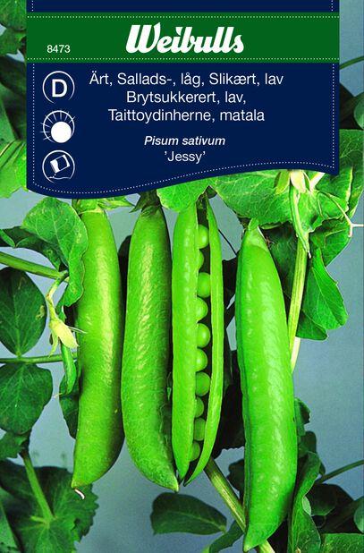 Salaattiherne 'Jessy'
