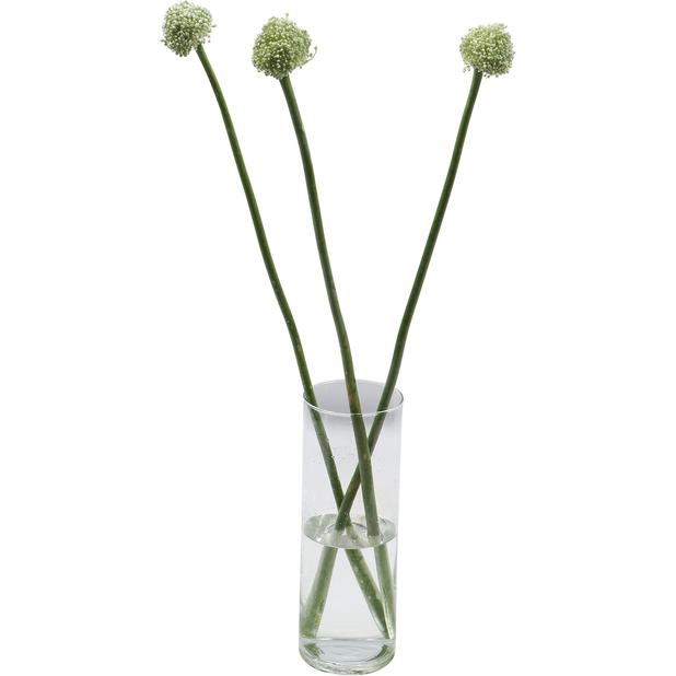 Allium 'Ping Pong' 5 kpl