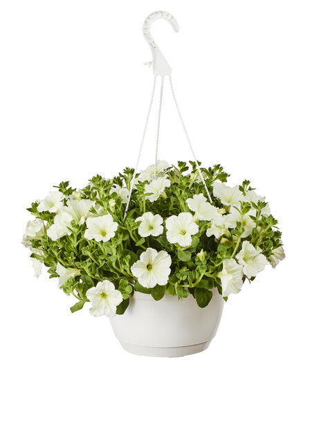 Petunia amppelissa, Ø25 cm, Valkoinen