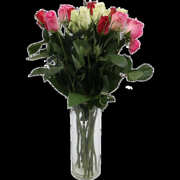 Ruusunippu, Korkeus 50 cm, Monivärinen