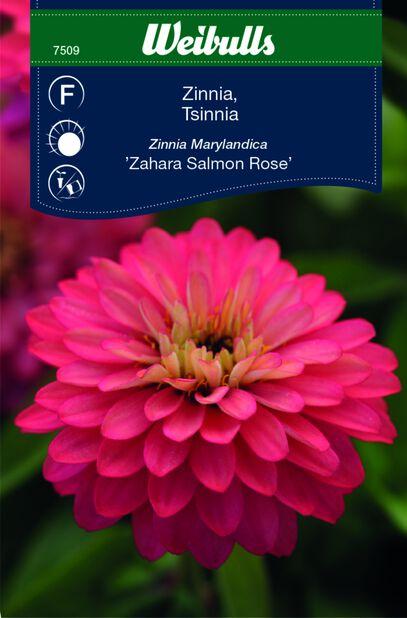 Tsinnia 'Sahara Salmon Rose'