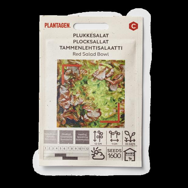 Tammenlehtisalaatti 'Red Salad Bowl'