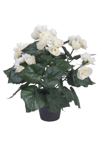 Begonia, K32 cm, valkoinen, tekokasvi