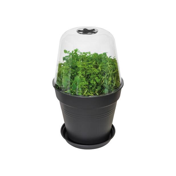 Kasvatuskupu Green Basics pyöreä, Ø17 cm, Läpinäkyvä