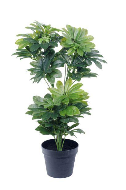 Siroliuska-aralia tekokasvi, Korkeus 75 cm, Vihreä