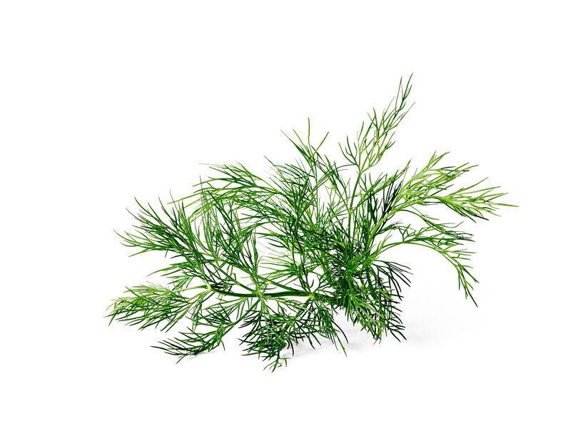 Tilli, Ø10.5 cm, Vihreä