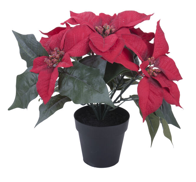 Tekokasvi joulutähti, Korkeus 25 cm, Punainen