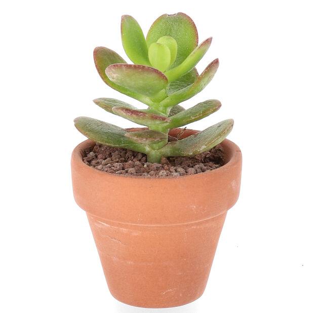 Kaktus-lajitelma, Korkeus 7 cm, Vihreä