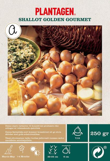 Salottisipuli 'Golden Gourmet', Beige