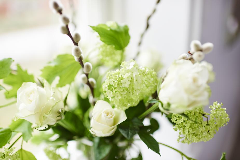 Ruusunippu, Korkeus 50 cm, Valkoinen
