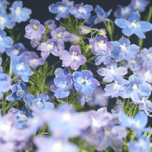 Ritarinkannus 'Delfix Blue', Ø17 cm, Sininen