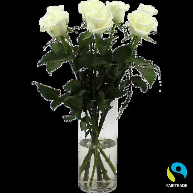 Ruusut 7-pkt Fairtrade, Korkeus 50 cm, Valkoinen