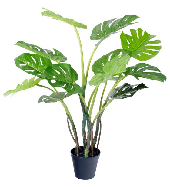 Peikonlehti tekokasvi, Korkeus 65 cm, Vihreä