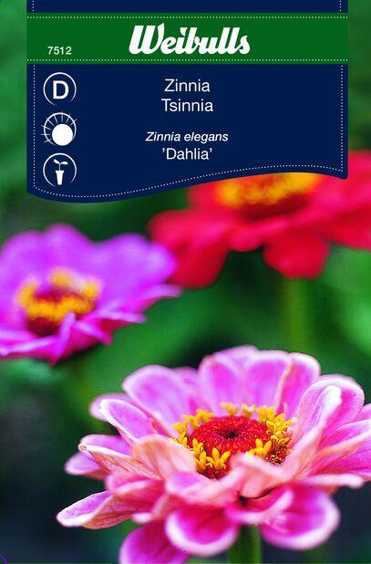 Tsinnia