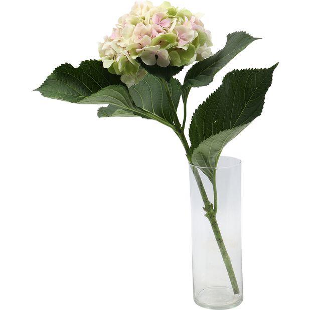 Hortensia, Korkeus 50 cm, Monivärinen