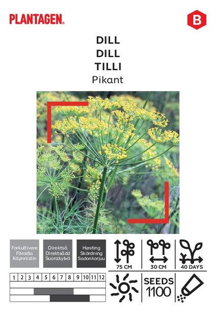 Tilli 'Pikant'
