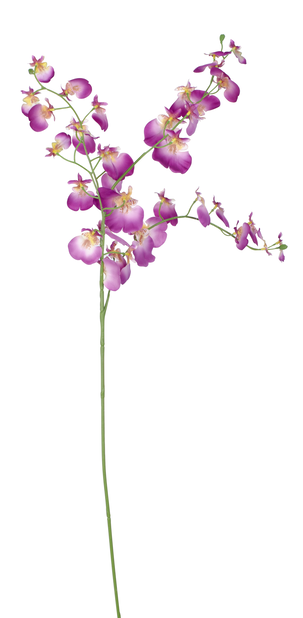 Orkidean oksa Oncidium tekokasvi, Korkeus 92 cm, Violetti