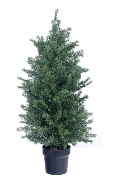 Tekosypressi, Korkeus 90 cm, Vihreä