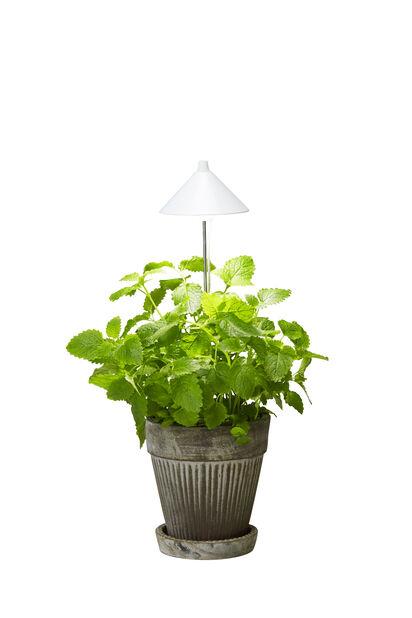 Kasvivalaisin kukkaruukkuun Sunlite, Korkeus 100 cm, Valkoinen