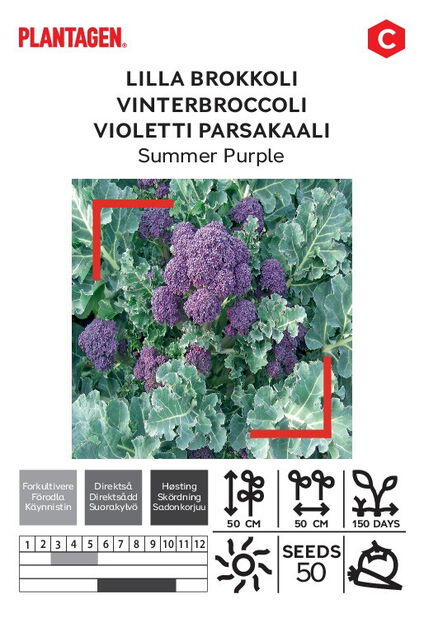 Violetti parsakaali 'Summer Purple'