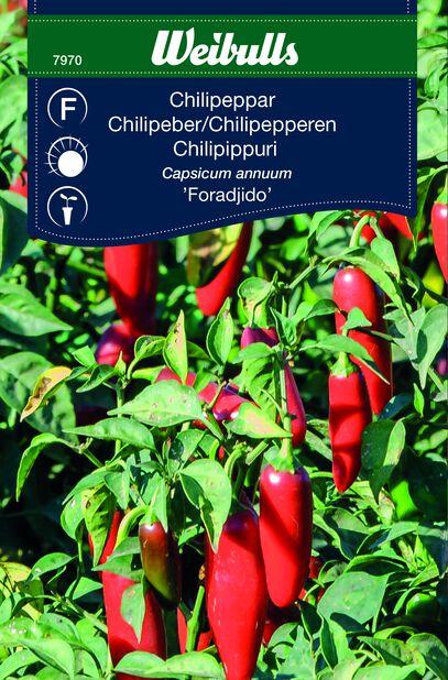 Chili 'Foradjido'