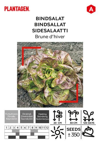 Sidesalaatti 'Brune d´hiver', Monivärinen