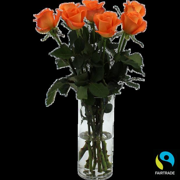 Ruusunippu, Korkeus 50 cm, Oranssi