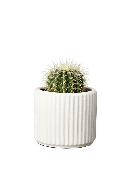 Kaktus-lajitelma, Korkeus 20 cm, Vihreä
