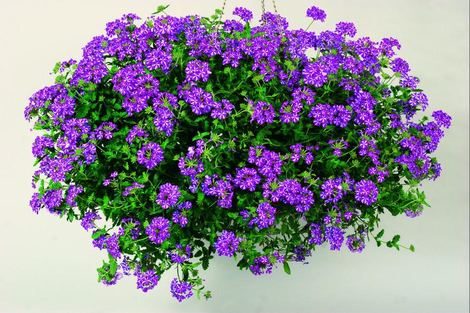 Midsummer Romantic Garden h. basket 25 cm