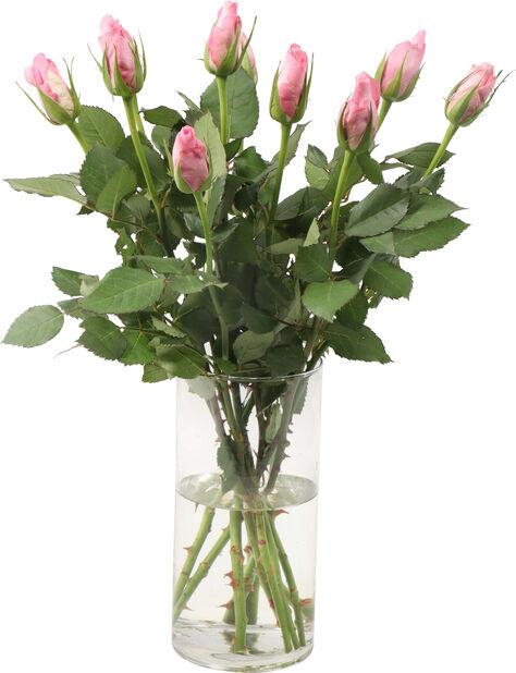 Ruusut 10-pakk, Korkeus 40 cm, Useita värejä