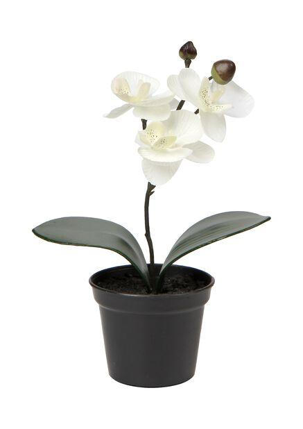 Orkidea tekokasvi, Pituus 20 cm, Valkoinen
