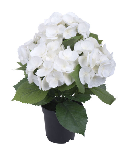 Hortensia tekokasvi, Korkeus 35 cm, Valkoinen